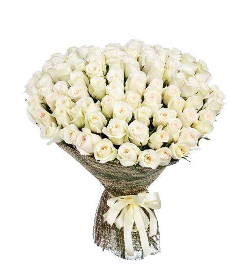 White-Roses-24-50-100