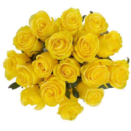 Yellow-Roses-24-50-100