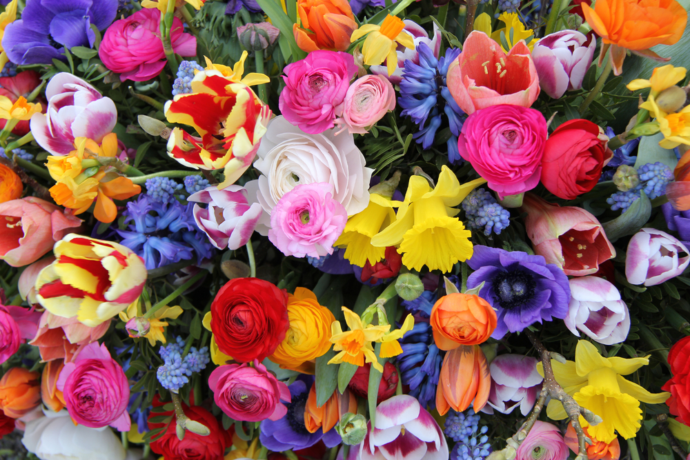 The Most Popular Flowers