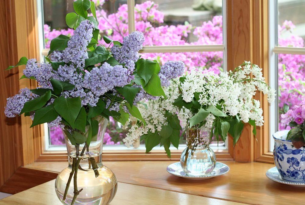 Flowers For Vases