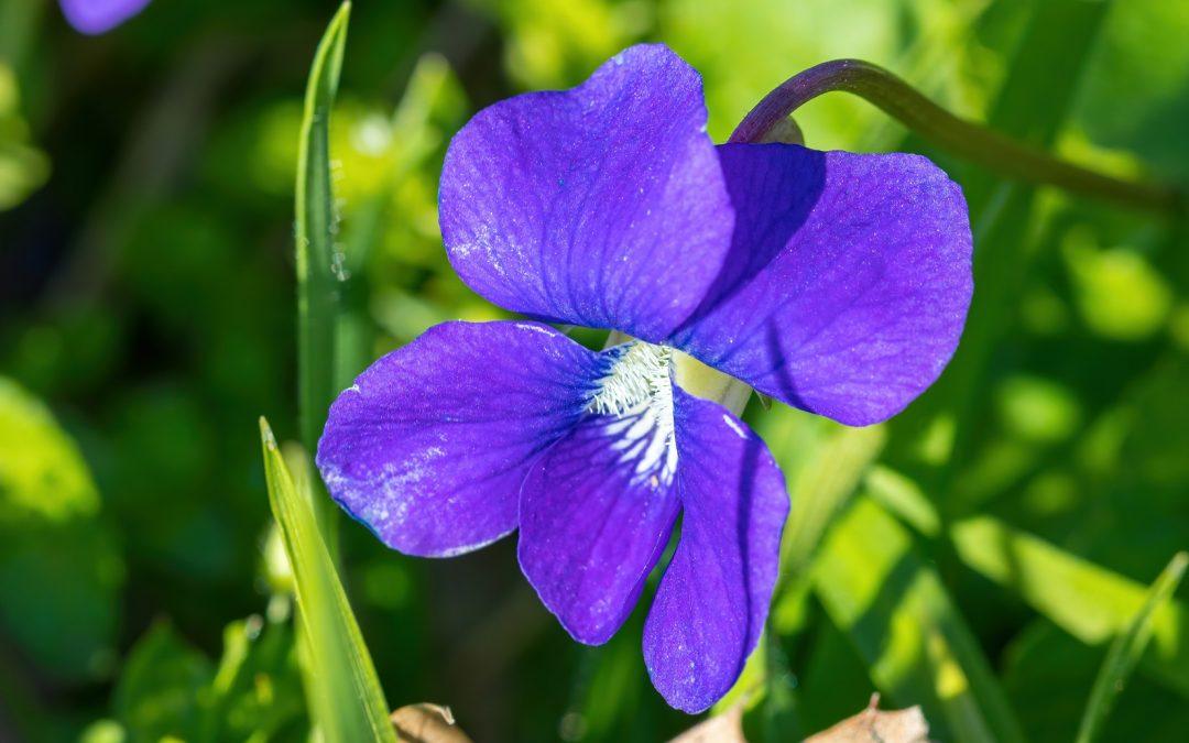 The Incredible Iris
