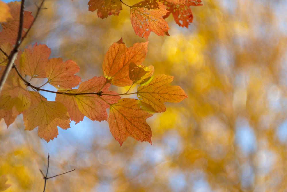 Autumn's Birth Blossoms